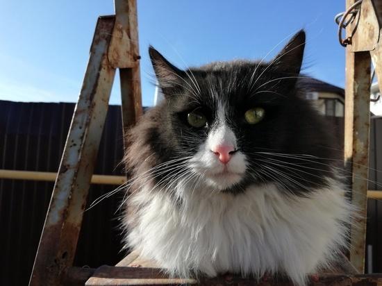 Приют для тысяч животных построят на Ставрополье