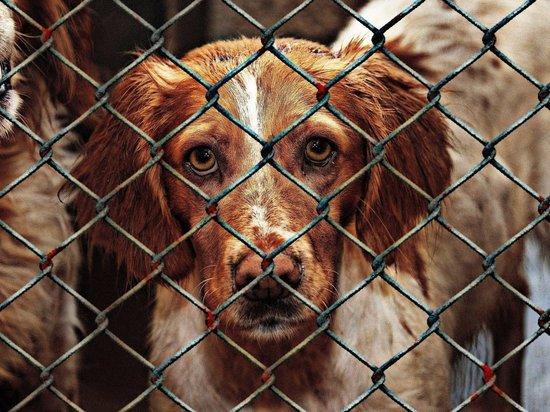 В Дороничах приют для животных работал с нарушениями
