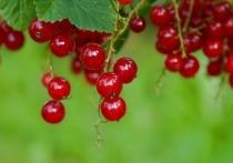 Какая польза волгоградцам от летних ягод