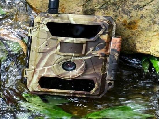 Мусорящих в лесу жителей Ямала будут отслеживать фотоловушки