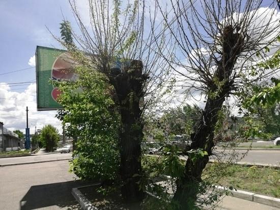Рекламные щиты предложили убрать с газонов в Чите