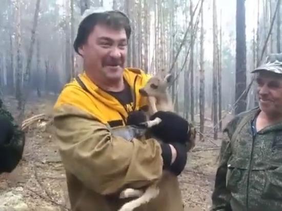 В Бурятии сотрудник лесхоза вытащил олененка из лесного пожара