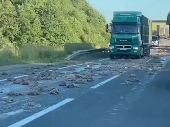 В Ярославской областВ Ярославской области дорогу устлали давленой курятинойи дорогу устлали давленой курятиной