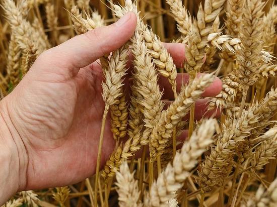 В Оренбургской области зерно на экспорт оказалось некачественным