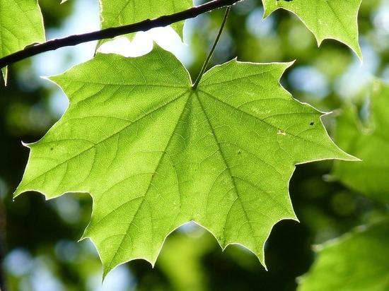 Более 1500 новых растений высадят на улице Николаева в Смоленске