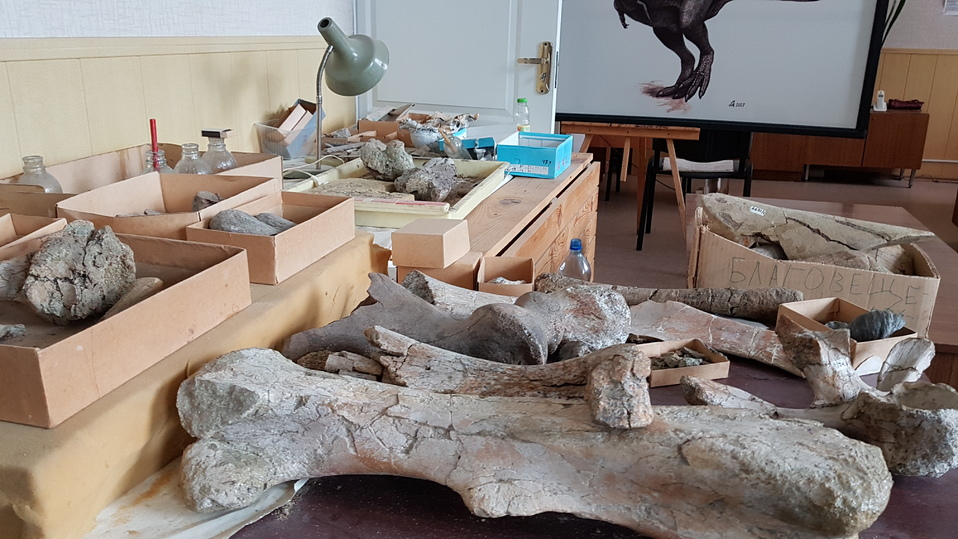 Ученый палеонтологического музея Болотский: кость динозавра сравнима со скрипкой Страдивари