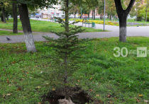 За пять лет в Казани высадят 100 тысяч деревьев