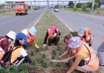 Коронавирус чуть не сорвал высадку цветов в столице Тувы