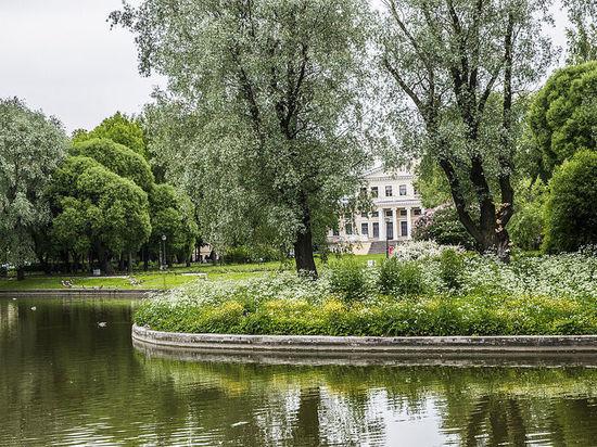 Сады и парки Петербурга закрыли из-за сильного ветра