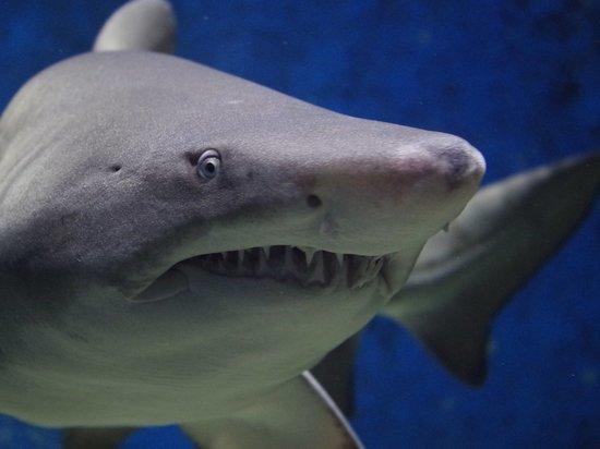 Подросток погиб после нападения акулы в Австралии