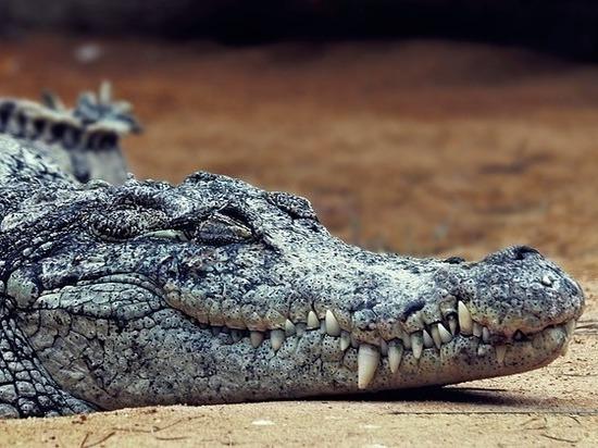 Кузбассовца оштрафовали за попытку ввезти в регион чучело крокодила