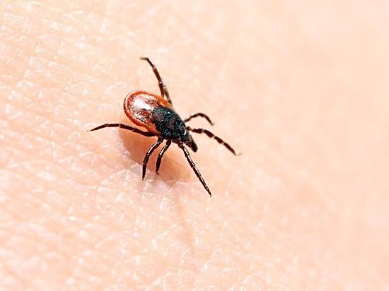 Клещи укусили на треть меньше забайкальцев во время эпидемии коронавируса