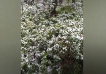 В середине лета заповедник на юге края завалило снегом