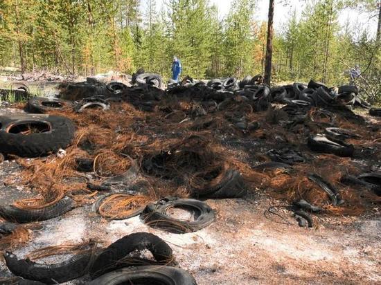 Нефтяники Ноябрьска и Муравленко очищают лес от мусора