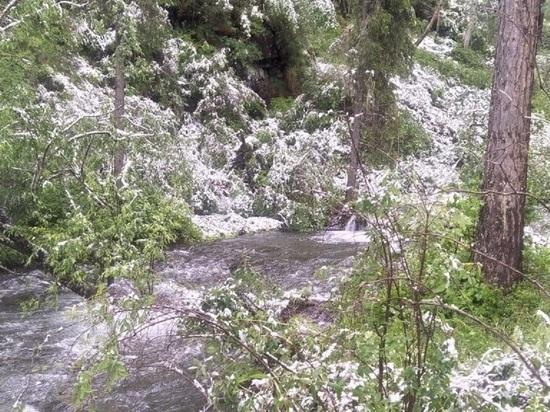 В Красноярском крае после жары +30 выпал снег