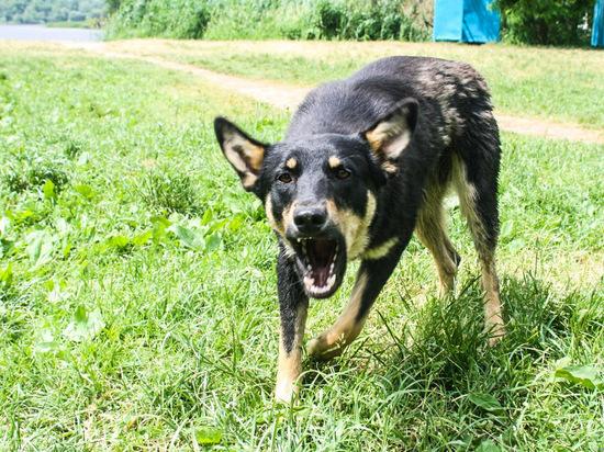 На 3-летнего ребенка напала бродячая собака в Тверской области