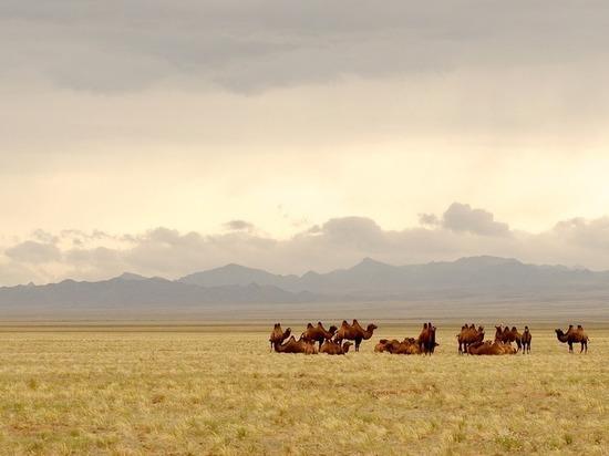 В Монголии человек умер после заражения бубонной чумой