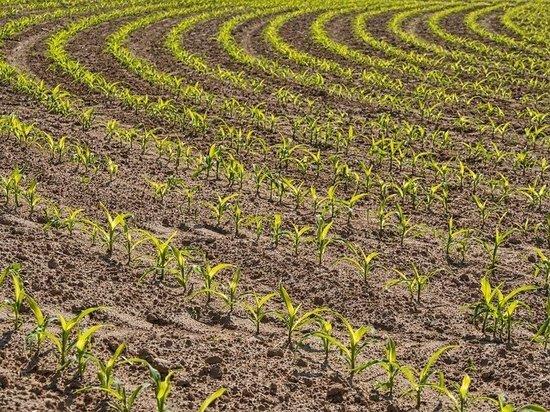 Уже 12 предприятий планируют заняться в регионе органическим производством овощей и фруктов, зерна и кормовых культур на площади свыше 7 тысяч га