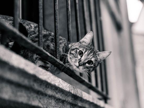 В Тюмени запертый на балконе кот переполошил всю улицу
