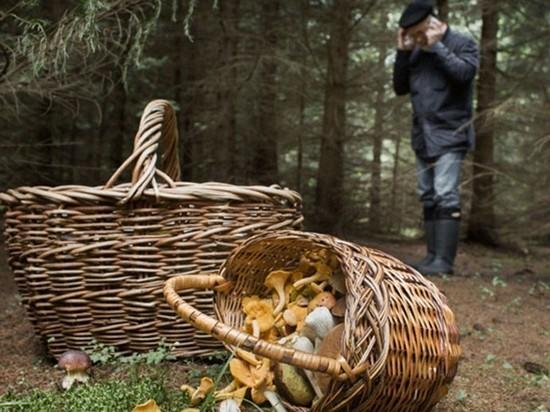В лесу Тверской области нашли тело грибника