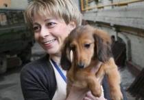 Собака доктора Лизы погибла в результате нападения ротвейлера в Подмосковье