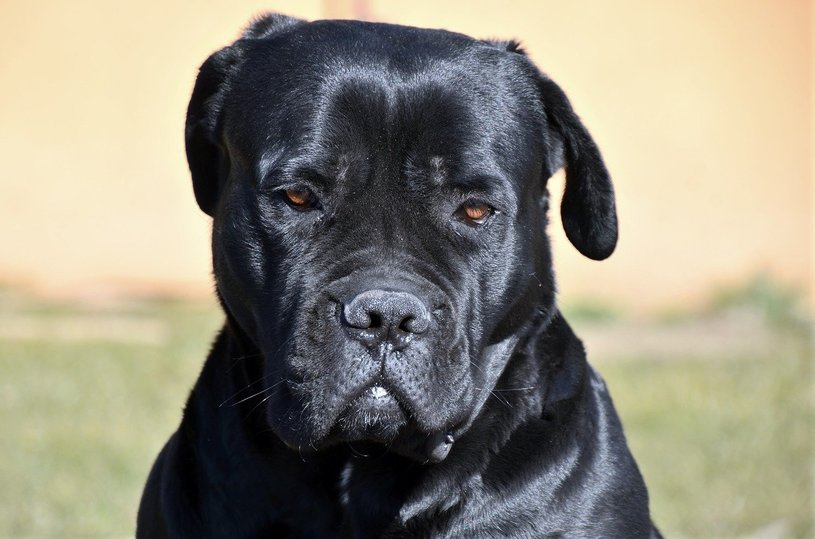 В суд на хозяина трех агрессивных собак, которые ее покусали, подает жительница Пскова, фото-1