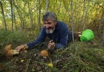 Чего стоит опасаться волгоградским грибникам в этом сезоне