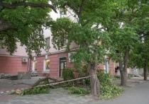 В Петрозаводске повредили вековые яблони при выкапывании поребриков на Ленина