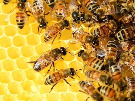Подмосковным депутатам удалось создать правовую базу для охраны насекомых