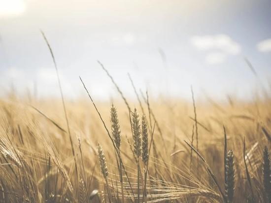 National Interest испугался остановки экспорта зерна из России