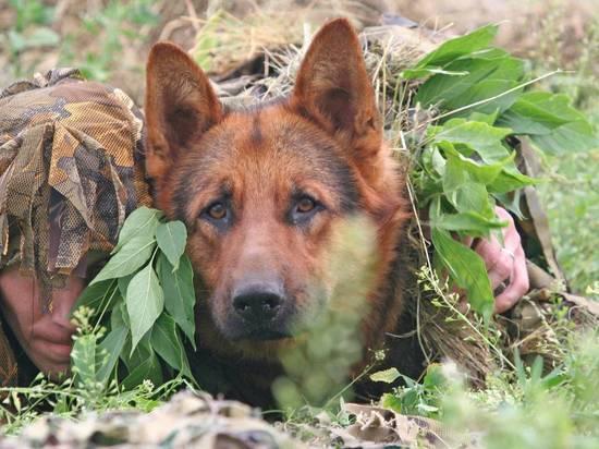 В Австрии начали тренировать собаку искать заразившихся коронавирусом