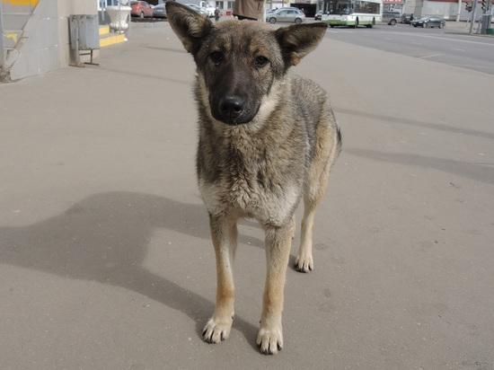 Mash: В Подмосковье бизнесмен задавил собаку и уехал с места ДТП