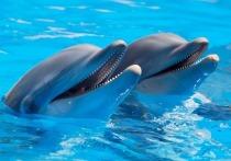 Эксперты оценили сообщения западных СМИ о российских «дельфинах-шпионах»