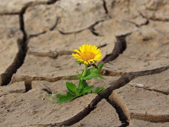 В Челябинской области из-за засухи вводят режим ЧС