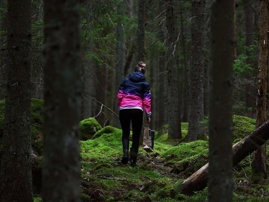 За выходные в лесах Подмосковья потерялись 106 грибников