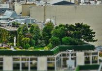 На крышах московских домов пообещали разбить сады