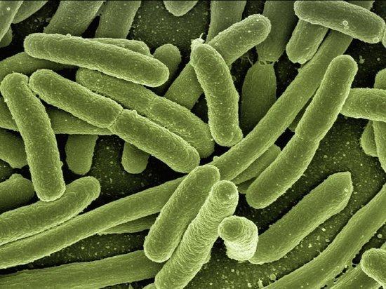 Эксперт рассказал о том, как передается бубонная чума