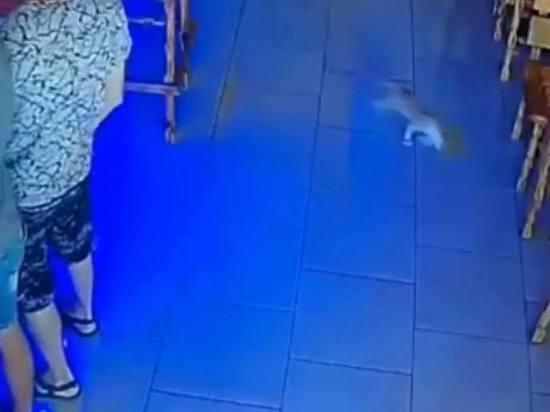 Кот дважды за вечер пытался украсть деньги в баре в Анапе