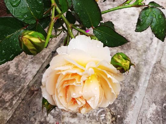 По числу упоминаний цветка в стихах поэта
