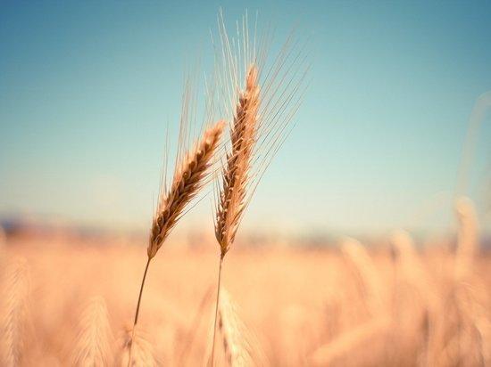 В Челябинской области из-за серьезной засухи пострадает урожай