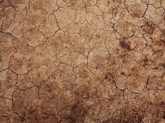 Эксперты спрогнозировали засуху и гибель урожая в 5 регионах РФ