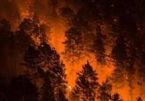Показываем жуткие фото лесных пожаров в Красноярском крае