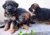 В Петербурге полиция ищет напавших на собачий приют разбойниц