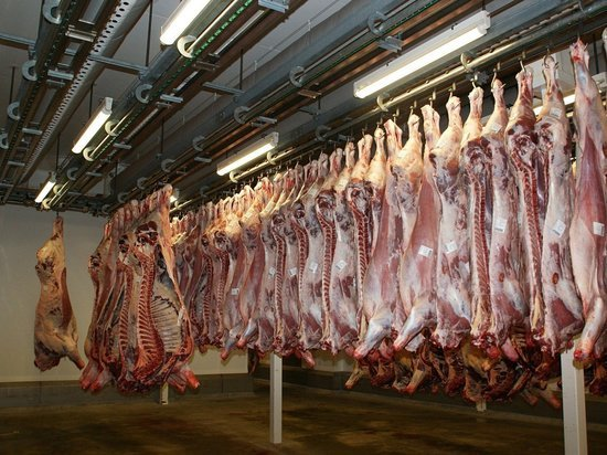 Крысы заполонили мясоперерабатывающую компанию в Германии: 400 тонн мяса уничтожат