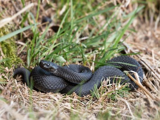 «Змея первой нападать не станет»