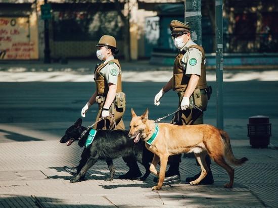 В Чили обучают собак выявлять людей, зараженных коронавирусом