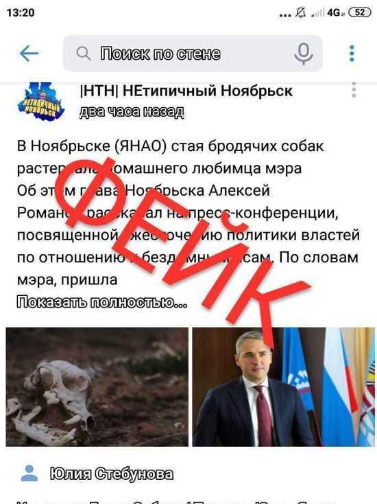 Бродячие псы растерзали терьера: в соцсетях распространяют фейк о гибели собаки главы Ноябрьска