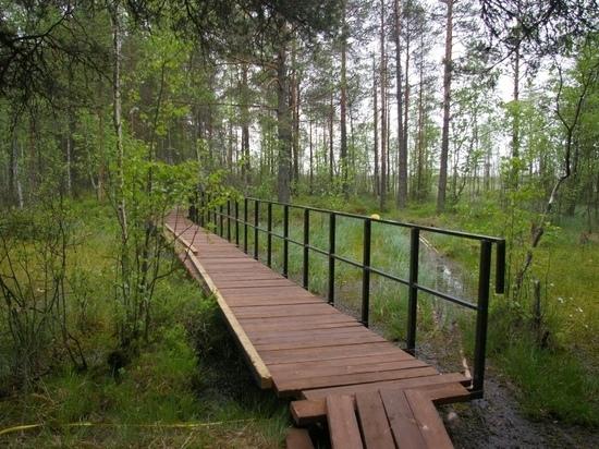 Экотропу «Сестрорецкое болото» откроют в августе