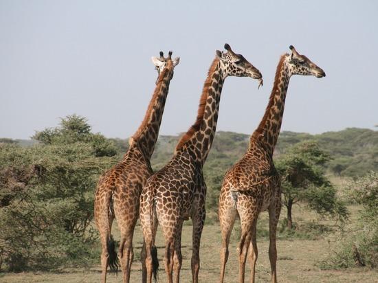 В МИД пояснили выбор Танзании для возобновления авиасообщения