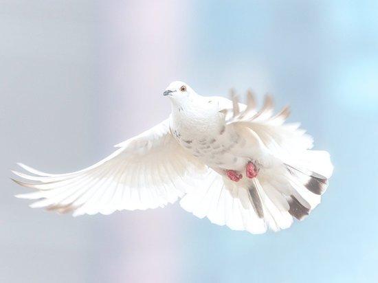 Ученые нашли останки гигантского голубя